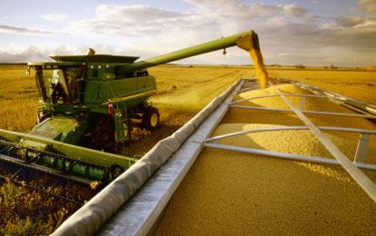 Governo libera R$ 12 bi para produtores de soja e milho